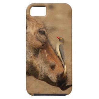 Un Oxpecker en un hocico de los warthogs, Funda Para iPhone 5 Tough