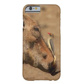 Un Oxpecker en un hocico de los warthogs, Funda De iPhone 6 Barely There