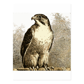 Un pájaro 59 tarjetas postales