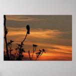 un pájaro en el árbol en la puesta del sol impresiones