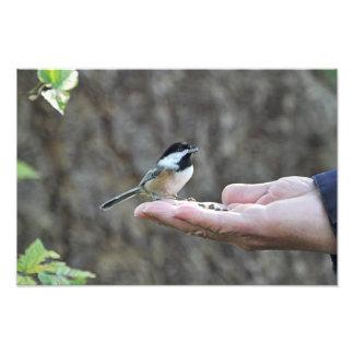 Un pájaro en la mano impresion fotografica