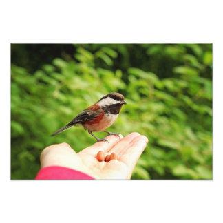 Un pájaro en la mano impresión fotográfica