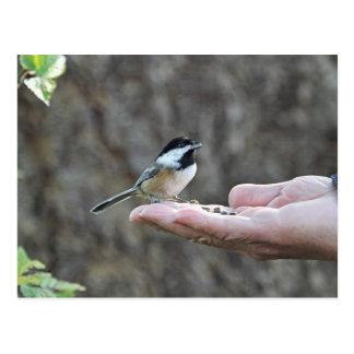 Un pájaro en la mano