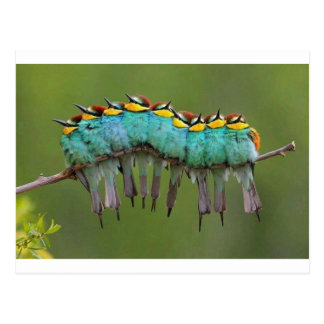 Un Pájaro-erpillar Postal