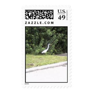 Un pájaro salvaje en la Florida Sellos