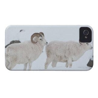Un par de espolones de las ovejas de Dall mira Case-Mate iPhone 4 Protector