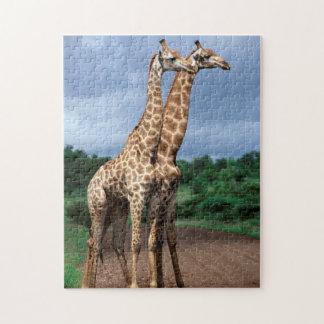 Un par de jirafas en el camino, nacional de Kruger Puzzle