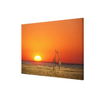 Un par de la jirafa camina en la puesta del sol, impresión en lienzo