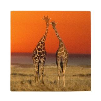 Un par de la jirafa camina en la puesta del sol
