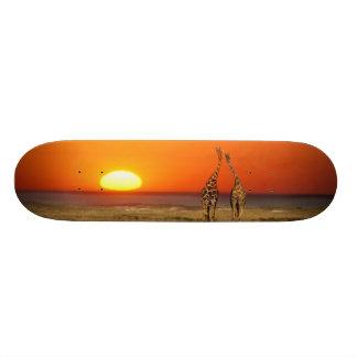 Un par de la jirafa camina en la puesta del sol, patín