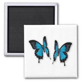 Un par de mariposas azules tropicales imán cuadrado