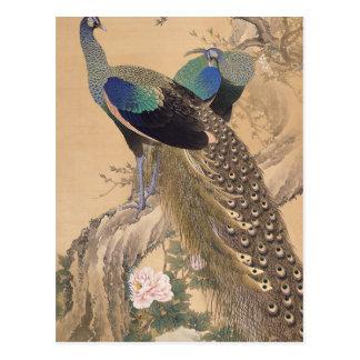 Un par de pavos reales en primavera de Imao Keinen Tarjetas Postales