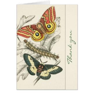 Un par de polillas le agradece las tarjetas de not
