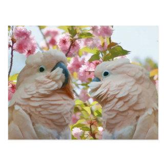 Un par de postal de los flores de los loros y de A