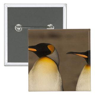 Un par de rey pingüinos (Aptenodytes P. Pins