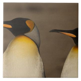 Un par de rey pingüinos (Aptenodytes P. Teja Cerámica