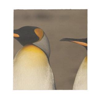 Un par de rey pingüinos (Aptenodytes P. Bloc