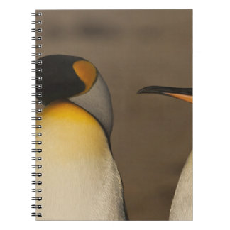 Un par de rey pingüinos (Aptenodytes P. Libros De Apuntes