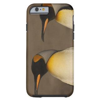 Un par de rey pingüinos (Aptenodytes P. Funda De iPhone 6 Tough