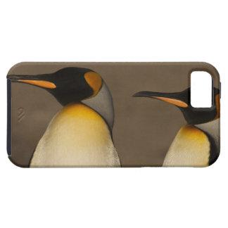 Un par de rey pingüinos (Aptenodytes P. iPhone 5 Protector