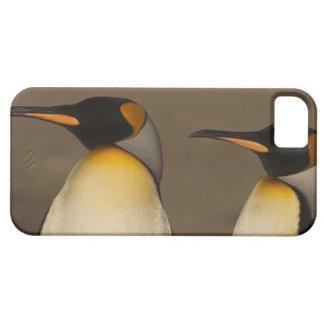Un par de rey pingüinos (Aptenodytes P. iPhone 5 Fundas