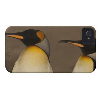 Un par de rey pingüinos (Aptenodytes P. iPhone 4 Protector