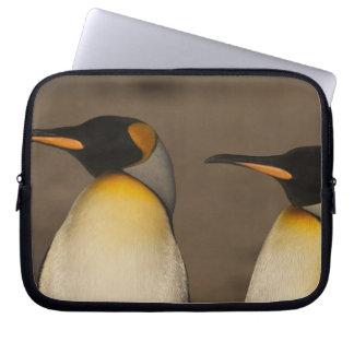 Un par de rey pingüinos (Aptenodytes P. Funda Ordendadores