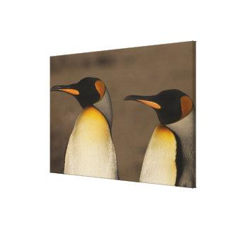 Un par de rey pingüinos (Aptenodytes P. Impresiones En Lona