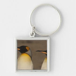 Un par de rey pingüinos (Aptenodytes P. Llavero Personalizado