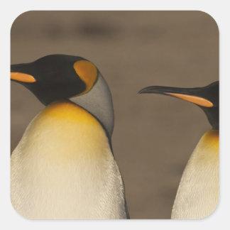 Un par de rey pingüinos (Aptenodytes P. Calcomania Cuadrada Personalizada