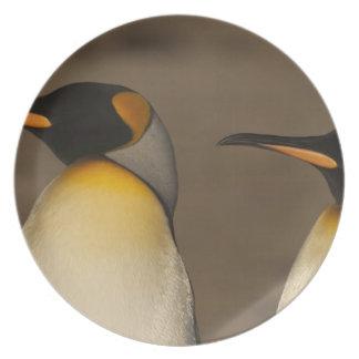 Un par de rey pingüinos (Aptenodytes P. Platos