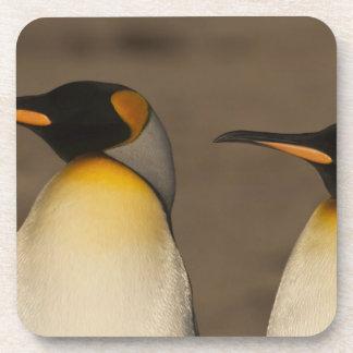 Un par de rey pingüinos (Aptenodytes P. Posavasos