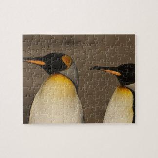 Un par de rey pingüinos (Aptenodytes P. Puzzles Con Fotos