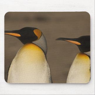 Un par de rey pingüinos (Aptenodytes P. Tapete De Raton