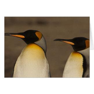 Un par de rey pingüinos (Aptenodytes P. Tarjeta