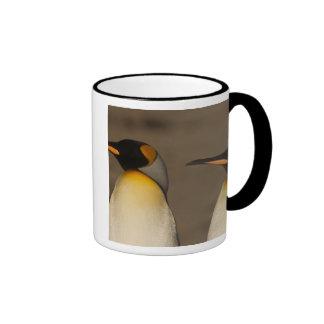 Un par de rey pingüinos (Aptenodytes P. Tazas