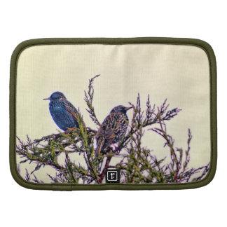 Un par del pájaro de Starling Planificadores