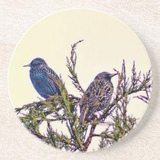 Un par del pájaro de Starling Posavasos Para Bebidas