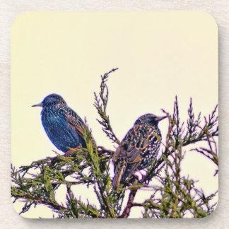 Un par del pájaro de Starling Posavasos De Bebida