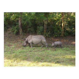 Un parque nacional Nepal de Chitwan del rinoceront Tarjeta Postal