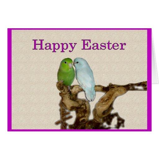 Un parrotlet Pascua feliz Tarjeta De Felicitación