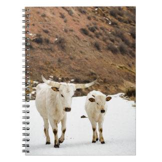 Un paseo en la nieve cuadernos