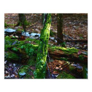 Un paseo en las maderas impresiones fotográficas