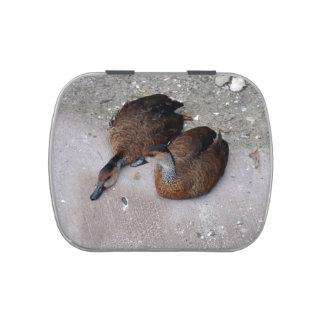 un pato que miente una sentada del pato latas de dulces