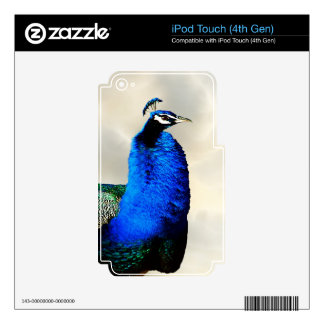 Un pavo real orgulloso calcomanías para iPod touch 4G