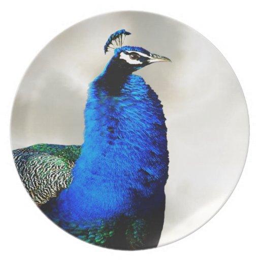 Un pavo real orgulloso platos de comidas