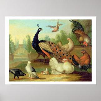 Un pavo real, palomas, pollos y un Jay en un parqu Póster