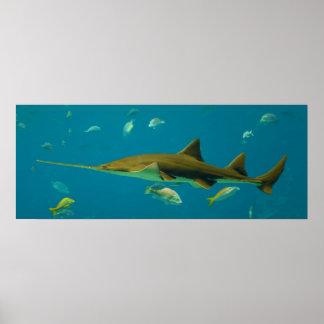 Un pectinata del Pristis del Sawfish de Smalltooth Poster