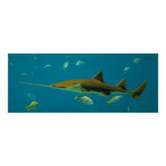 Un pectinata del Pristis del Sawfish de Smalltooth Póster