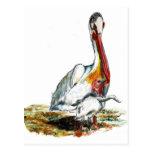 Un pelícano y un polluelo, lápiz de la acuarela postales